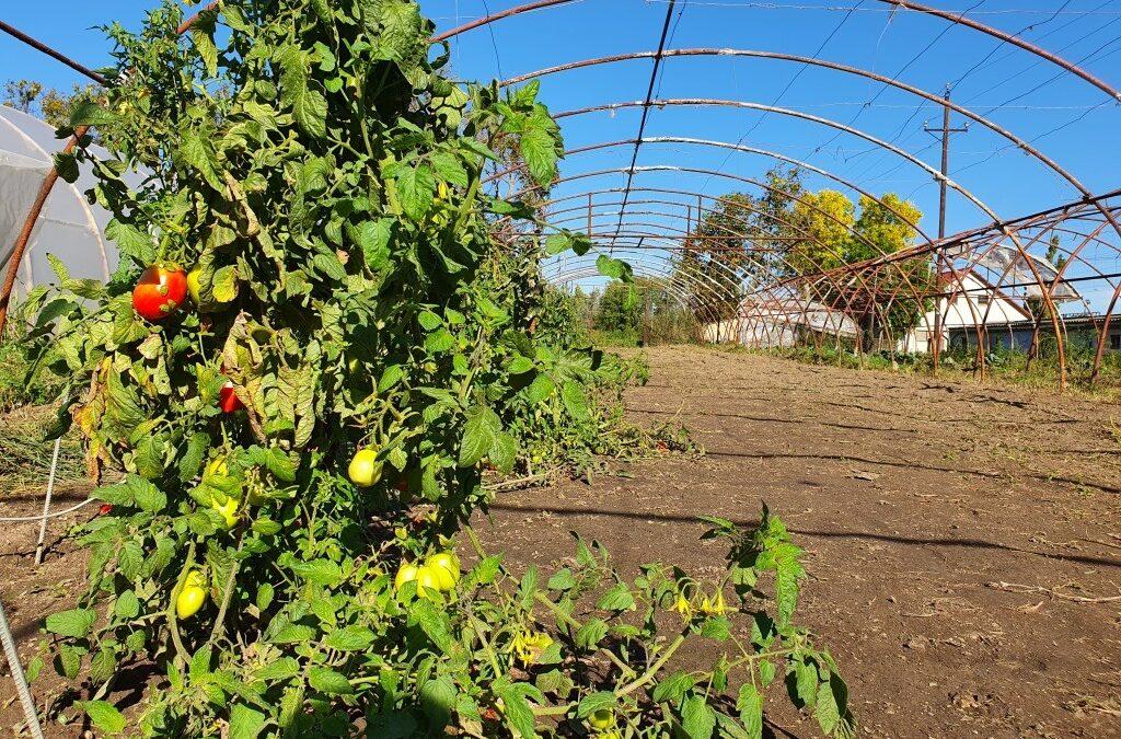 Októberi kerti teendők