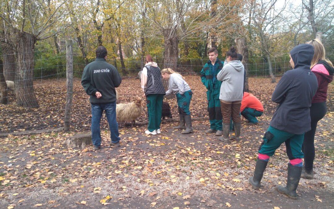 A magyarországi őshonos állatok megismerése és tanulmányozása