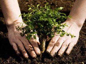 plant trees kaszc kaszc