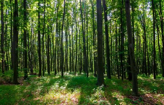 ÁSZÉV sikerek a Rothban erdő