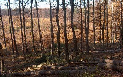 Soproni fölény az erdész OSZTV első fordulójában