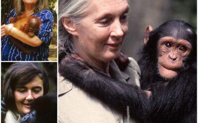 Fenntarthatósági Témahét 2021 – Jane Goodall Hope, azaz Remény című filmje kapcsán