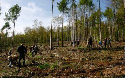 A rothos tanárok is bekapcsolódtak az erdősítési munkákba