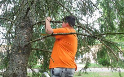 Madarak és fák napja Seregélyesen